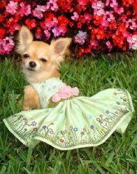 Dog Thong to iPaw: 15 Pet Products We Can't Believe Exist ...