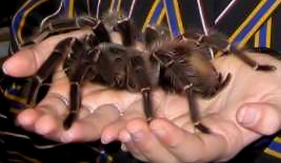 Goliath Bird Eating Spider & 6 Endangered Species That Arenu0027t Endangered Enough | Cracked.com