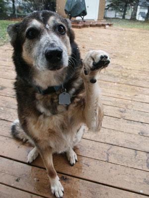 divorceddog