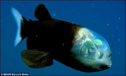 Real Animals Lifted Directly Out Of Your Nightmares - 15 transparent animals that almost dont look real
