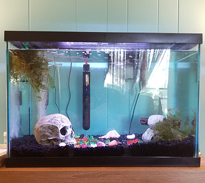 5 of the stupidest things i learned after owning fish for Carpe koi aquarium 300 litres