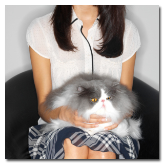 balinese cat cost