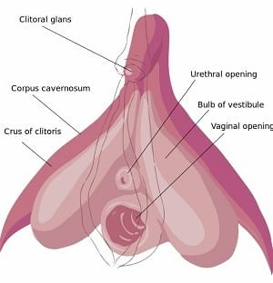 From female clitoris being wet raw