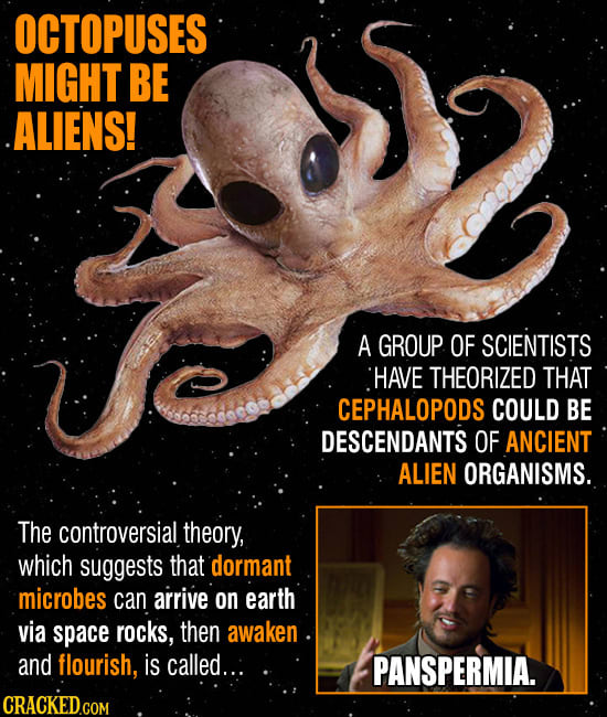 Strange Conspiracies Facebook Zynga And The Freemason: Space Octopuses & Other Weird Conspiracies Making The