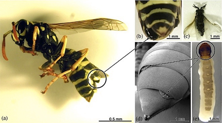 5 Disturbing Ways Insects Can 'Hack' Nature