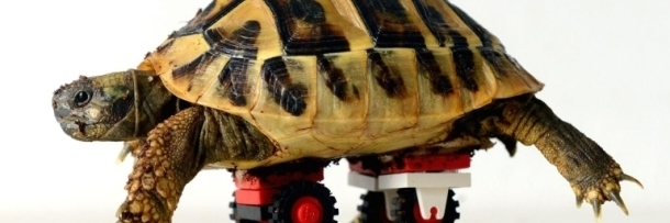 Surprising Ways Toys Made The World A Better Place - Injured tortoise gets set lego wheels help move