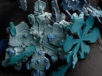 8 ordinary things that look insanely cool under a microscope