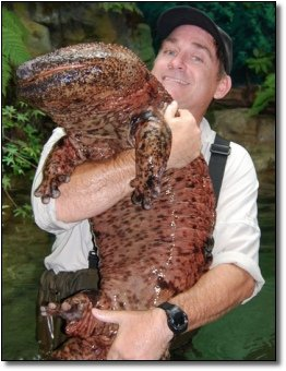 Giant Salamanders Have Been Plodding Around For About 30 Million Years Which Means They Survived Bears And Hyenas As Big Cows