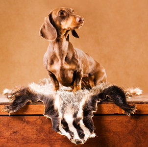 Dog Breeds With Secret Superpowers