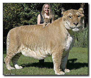 cat in the world 2013 via dailymail which is roman for oh my dear god its got my leg biggest