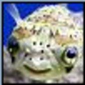 suspiciousfish Cracked photo