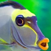 Venomousfish Cracked photo