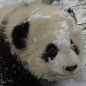 PandaPoo Cracked photo