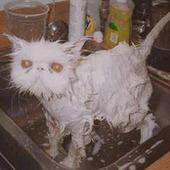 bathwithtoaster Cracked photo