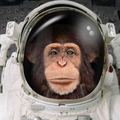 spacemonkeymojo Cracked photo