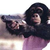 Gorillawarfare Cracked photo