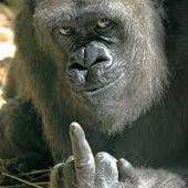 Gorilla1226 Cracked photo