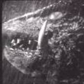 gamera210 Cracked photo