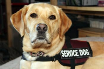 Can Landlords Charge A Pet Deposit For Service Dog