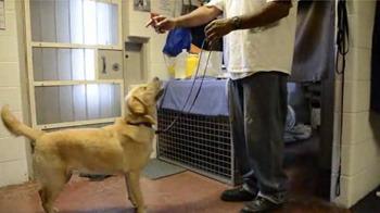 Service Dog Training Schools Maryland