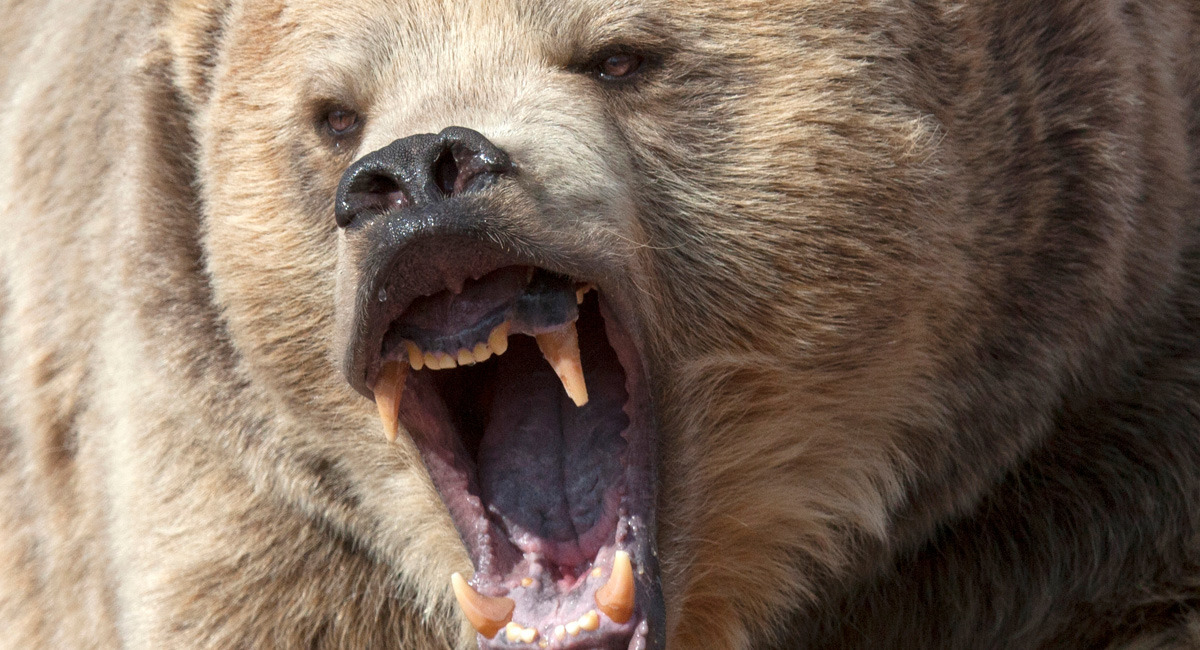 6 things you learn being mauled by bears cracked publicscrutiny Choice Image