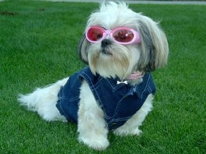 Wolves in Sheep's Clothing: The Badass Roots of 5 Sissy Dogs