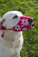 Dog Thong to iPaw: 15 Pet Products We Can't Believe Exist