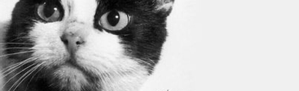 How Did History Forget The Cat Who Went To Space?