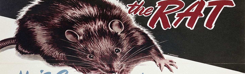 How Alberta, Canada Got Rid Of All Its Rats