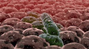 6 Objective Reasons Why Your Fear of Bacteria Is Irrational