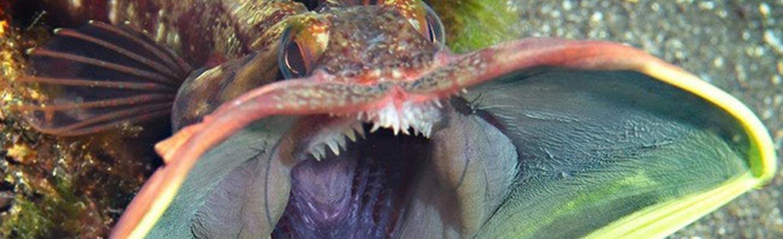 This Bizarre Fish Looks Just Like The Predator