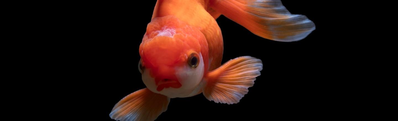 The Scientific Movement To Declare Fish A Myth (It Makes Sense. Really.)