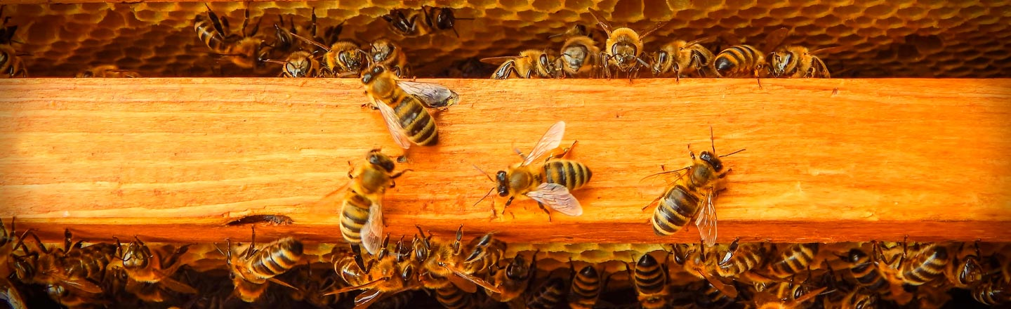 Beehives Are Now Black Market Gold In California