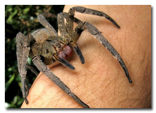 The 6 Real and Terrifying Spider Superpowers