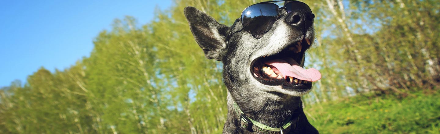 6 Crucial Yet Ridiculous Things To Know About Your Dog