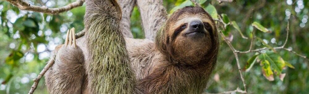 6 Innocent Animals Who Are Secretly Nightmare Machines