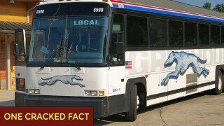 Greyhound Used To Say There's No Such Thing As 'Bus Rage.' Then Came The Cannibal.