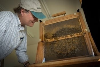 Taking care of bee-sness ... is exactly the kind of dumb pun an efficient bee would never make.
