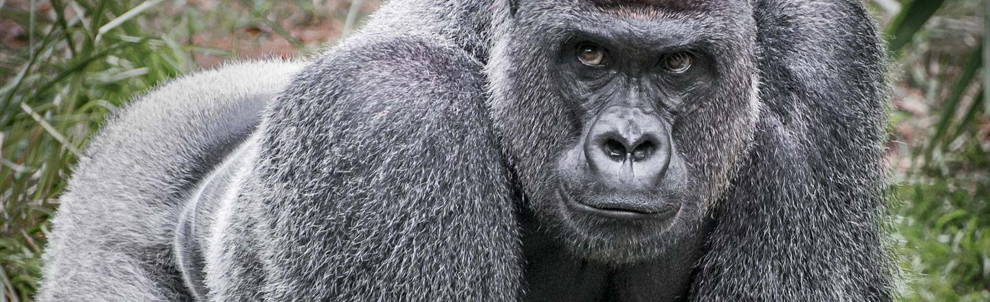 Are Gorillas Using Tinder Now? Spoilers: No, They're Not