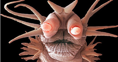 The 6 Most Nightmarish Worms On The Planet Crackedcom