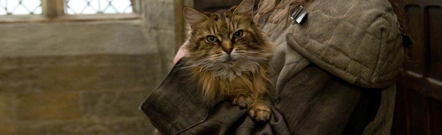 The Untold Story Behind The Hogwarts Cat