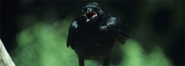 5 Birds That Suck: A Drunk Column