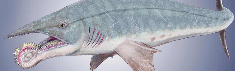 Meet The World's Dumbest-Looking Shark