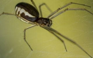 6 Horrifying Acts Of Desperation & Fear Caused By Spiders