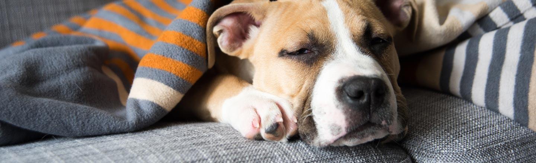 "An Old Dog (Maybe) Has ""Weak Positive"" Coronavirus"