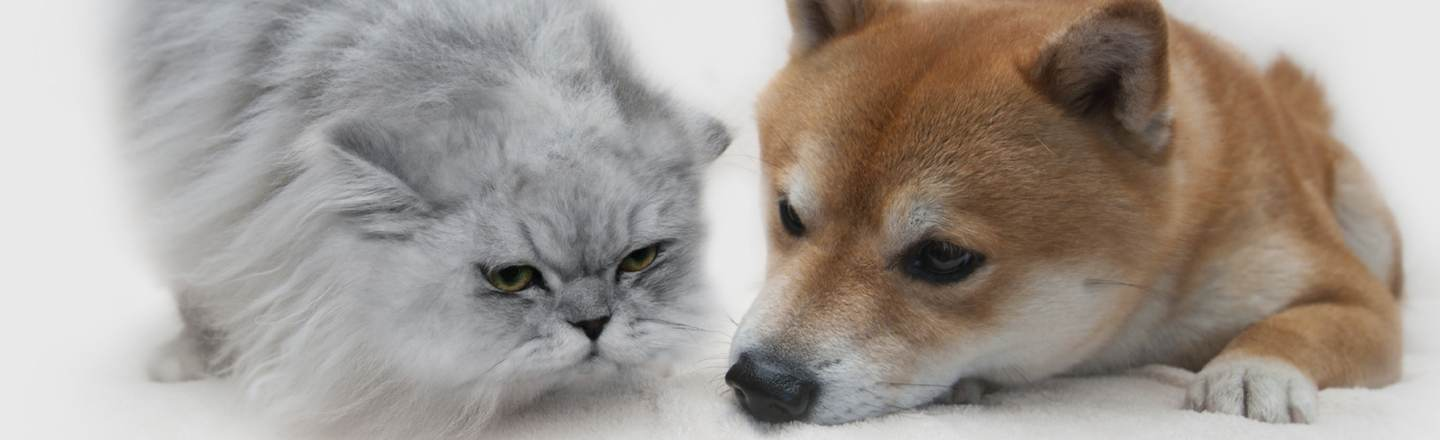 The Definitive Reason Cats Are Better Than Dogs
