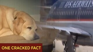 A Plane Kicked Off A Blind Man And His Dog, Then Kicked Off Everyone Else Too