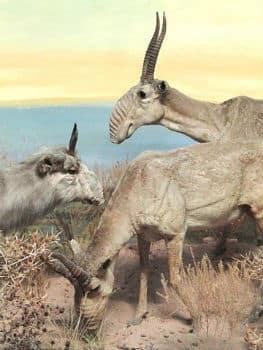 6 Endangered Animals We Should Let Go Extinct