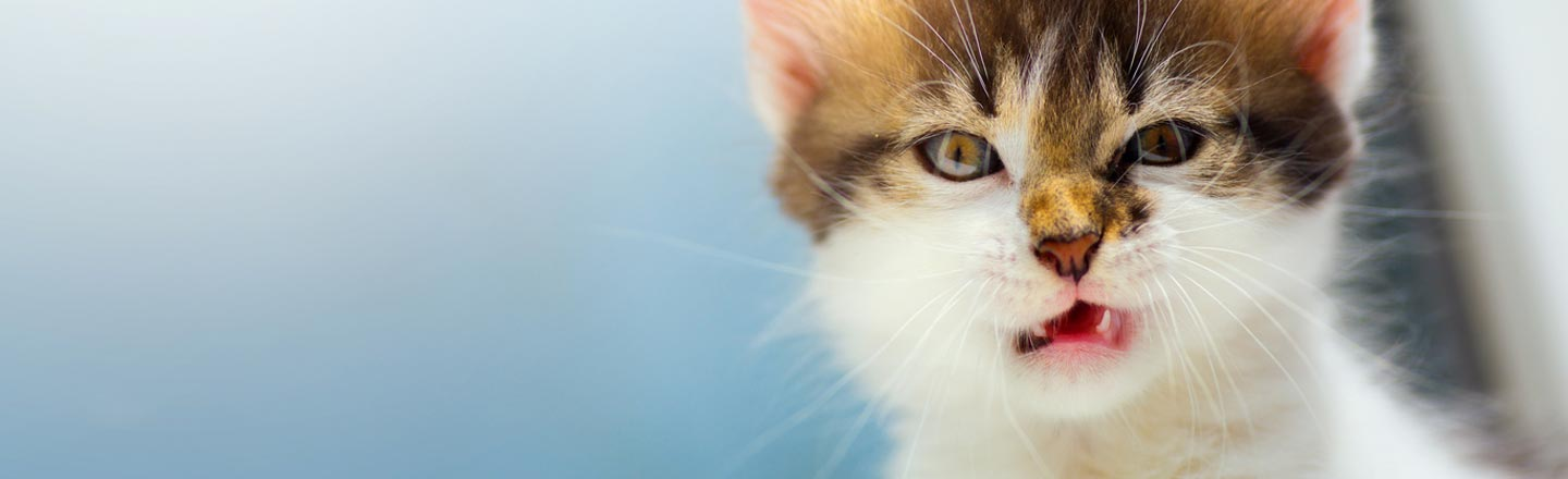 Cat Bombs: Maybe The Dumbest Idea Of The Middle Ages?