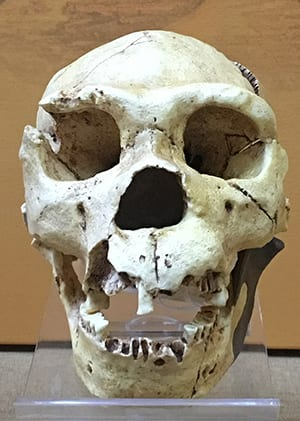 Not bad for people who would've been <A TARGET=_blank HREF=https://en.wikipedia.org/wiki/Human_evolution#Evolution_of_genus_Homo>about four evolutionary steps back</A> at the time.